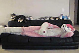 pink husky fursuit on couch